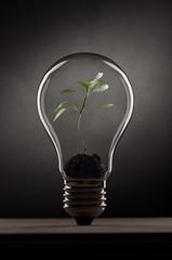 Plant inside the bulb