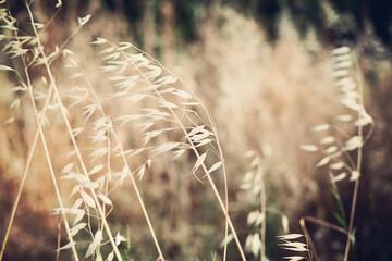 Grass bokeh background