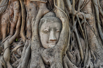 Buddha head in tree roots, Ayutthaya, Thailand