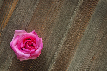 Single Rose on Cedar Table