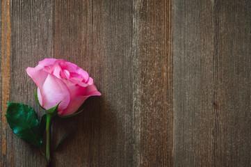 Single Stemmed Rose on Cedar Table