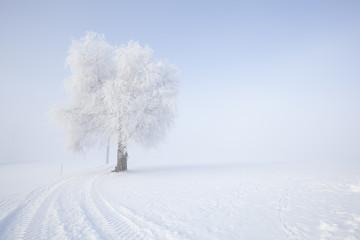 Frozen tree in winter landscape