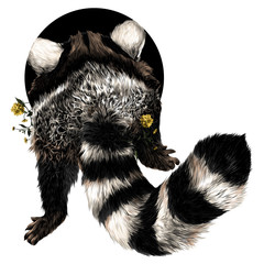 raccoon sketch vector graphics back color picture