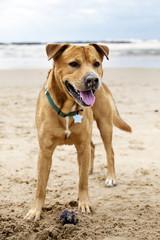 Joyful Dog on Winter Beach