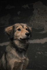 happy street dog
