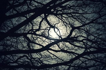 Moon shining through oak brenches