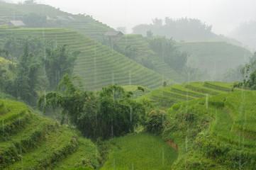 Rice terraces in the rain