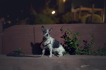 Dog in spotlight in a dark alley at night