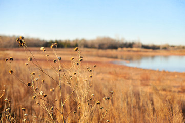 Yellow & Tan Marsh Landscape with Blue Sky