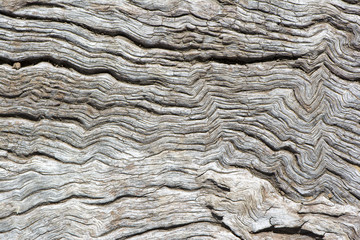 Abstract Textures and Shapes: Old Wood Log