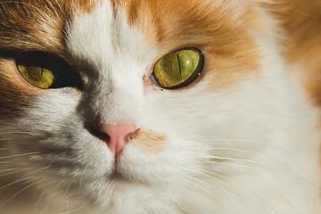 cat Animal fur cute and pet.
