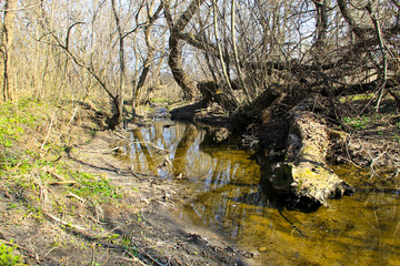 Small river in the forest on spring