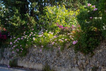 Insel, Mallorca, Spanien, Urlaub, Reisen, Erholung, Strand, Meer, Mittelmeer, Möwe, Tiere, Vögel, Natur, Erlebnis, Abenteuer