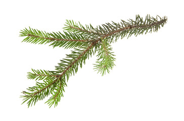 branch of Christmas tree isolated on white background close-up