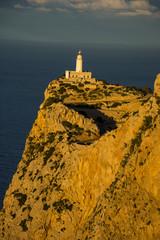 Urlaub, Holiday, Strand, Beach, Mallorca, Flower, Blumen, Pflanzen, Tiere, Landschaften, Landscape