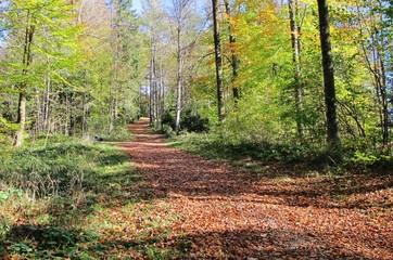 Wandern durch den herbstlichen Wald