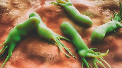 Campylobacter jejuni bacteria - scanning electron microscope -closeup - 3D Rendering