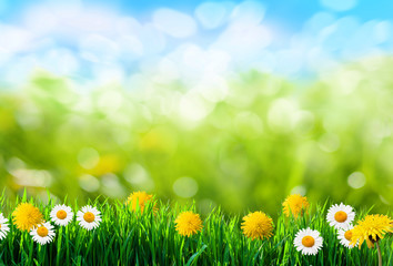 green grass and flowers background