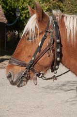 chevaux attelés à une charrette dans un village