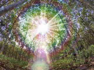 Natural tree landscape