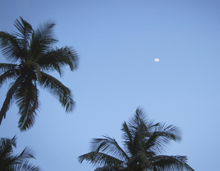 coconut palm trees and sky with moon