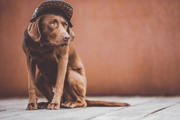 Cute dog in cap