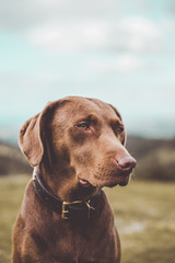 Charming dog in field