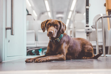 Dog in passenger compartment