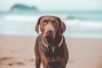 Dog posing on shore