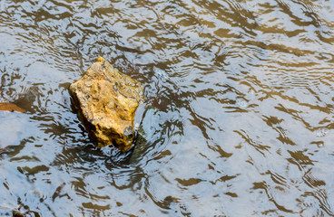 stream stone river crossing ferry journey reserve close-up background autumn mood