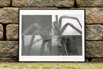 Spinne im Bilderrahmen