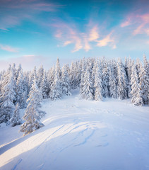 Beautiful winter sunrise in Carpathian mountains.