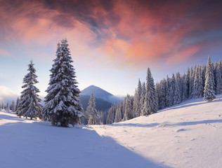 Fantastic winter sunrise in Carpathian mountains with snow covered trees.
