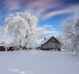 Sunny winter morning in Carpathian village with snow covered trees in garden