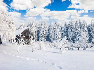Misty winter morning in Carpathian village with snow covered trees in garden.