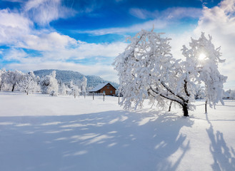 Sunny winter morning in Carpathian village with snow covered trees in garden.