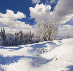 Picturesque winter morning in Carpathian mountains with snow covered trees