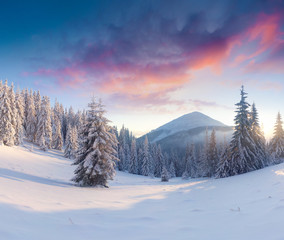 Splendid winter sunset in Carpathian mountains with snow covered fir trees.