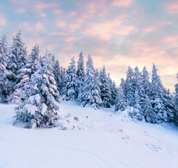 Magnificent winter sunrise in Carpathian mountains