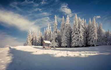 Winter morning after heavy snowfall in the mountain forest.