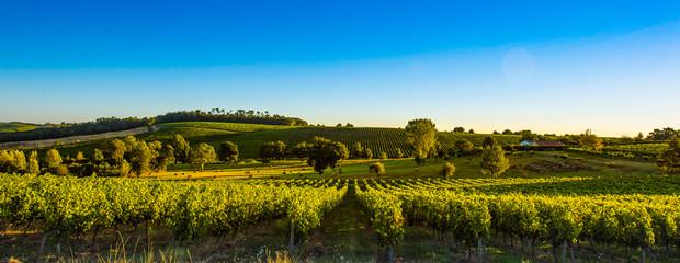 Garden Poster Vineyard Sunset landscape bordeaux wineyard france