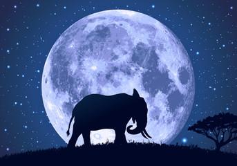 éléphant - lune - safari - savane - Afrique - africain - tourisme - voyage -mammifère