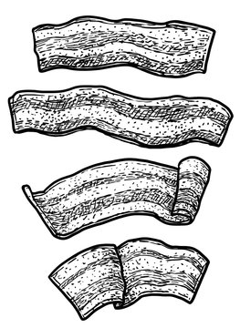 Bacon illustration, drawing, engraving, ink, line art, vector