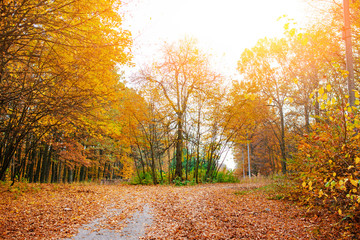 Bright and colorful landscape of sunny autumn forest with orange foliage and trail