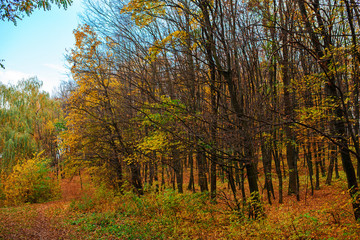 Bright and colorful landscape of autumn forest with trail covered with leaf