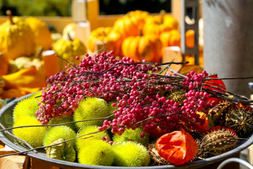 Autumn brought a variety of colorful fruits