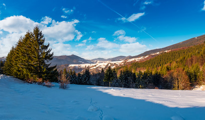 snow covered meadow among spruce forest in mountains. beautiful winter landscape on  a bright day