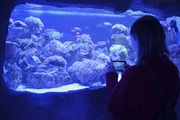Caucasian woman photographing fish in aquarium