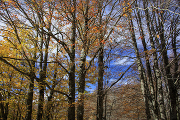 Photograph of a forest with autumn colors. Trees, leaves and a lot of green
