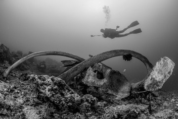 Scuba diver over the bones of a sperm whale in Indonesia in shallow depth in black and white